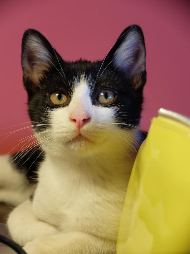 Se regala gatito - ESPAÑA - QUICK Anuncio