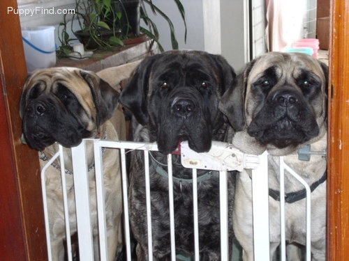 HA!!! That looks like my Peppy in the middle:D