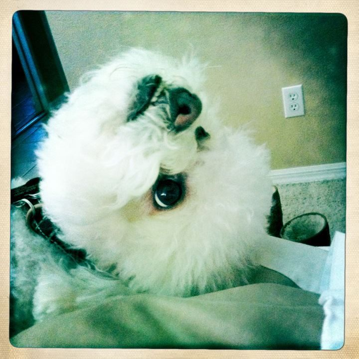 My doggie daydreams. About what, I'm not sure, but he has the heart of a poet.