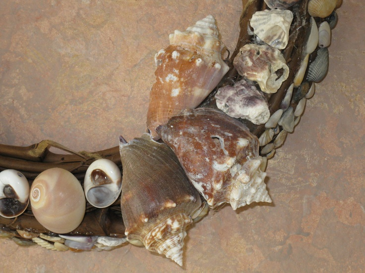 Florida fighting Conches