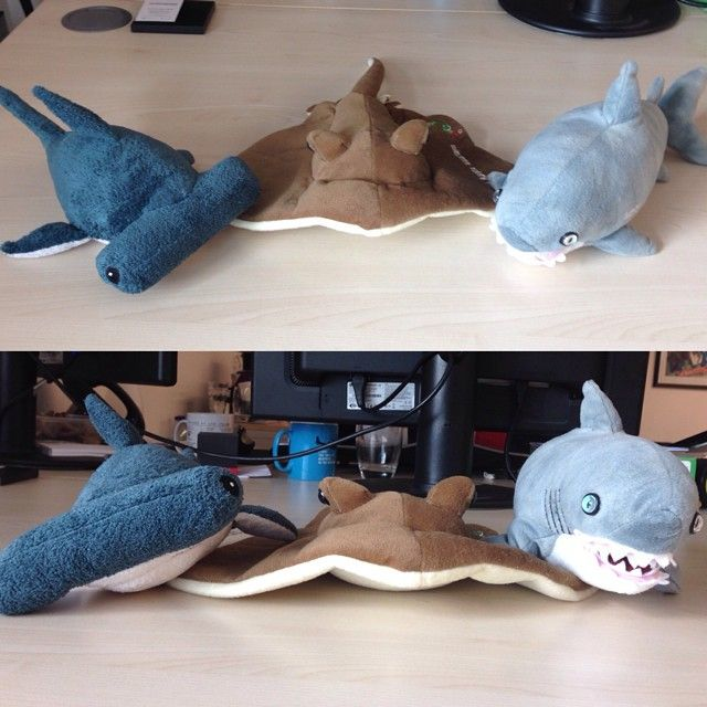 Fin-ishing the week with our National Marine Aquarium buddies in honour of #SharkWeek & Shark Trust UK