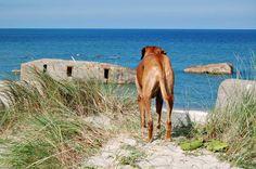 Reisen mit Hund - die besten Ziele