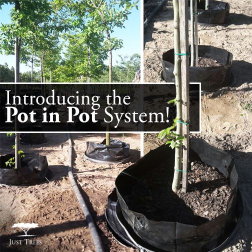 We are now using the Pot in Pot system! Our trees our now stored in a socket in the ground; this prevents them from blowing over in strong winds and it keeps the roots cool in summer and warm in winter (because they grow in a way that is closer to their natural environment). This method improves root growth, resulting in healthier roots and healthier trees! This system also reduces the amount of water needed to keep our trees happy and strong, so it's much friendlier on the environment :)