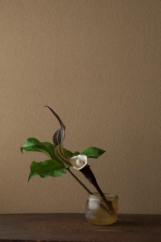 一日一花 川瀬敏郎 2012年5月28日(月) 白くてやわらかなことからの名です。 花=雪餅草(ユキモチソウ) 器=ローマングラス碗(ローマ時代)