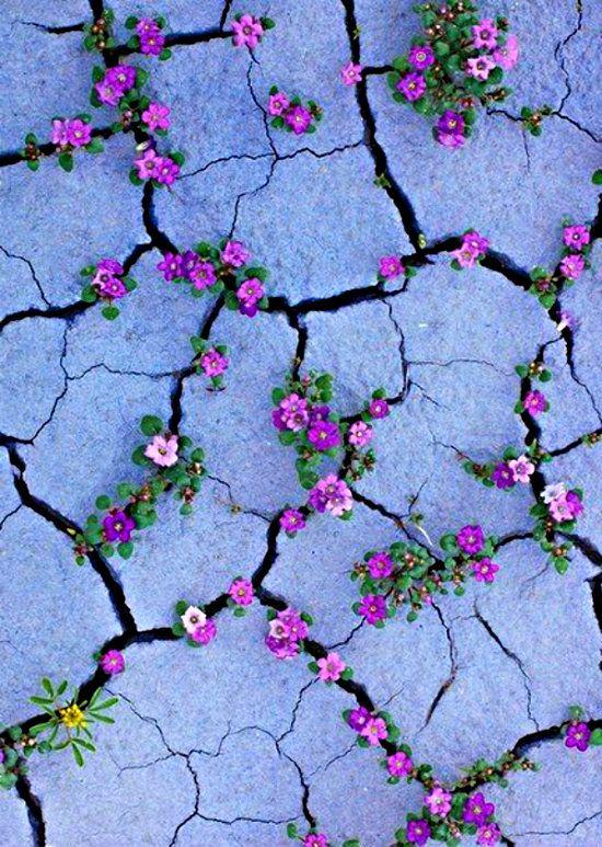 Цветущая пустыня в штате Юта Blooming desert in Utah