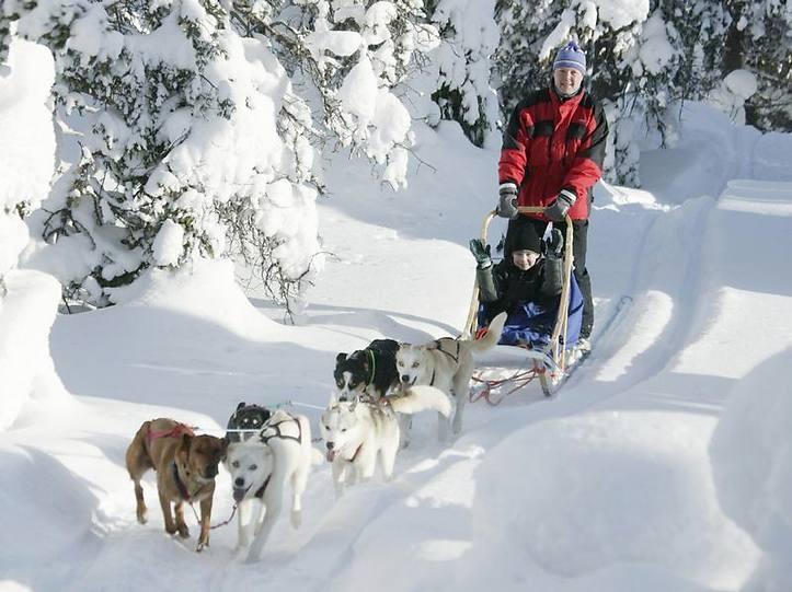 Eins mit der Natur: In Lappland kommen auch ungeübte Touristen mit dem Hundeschlitten gut voran.