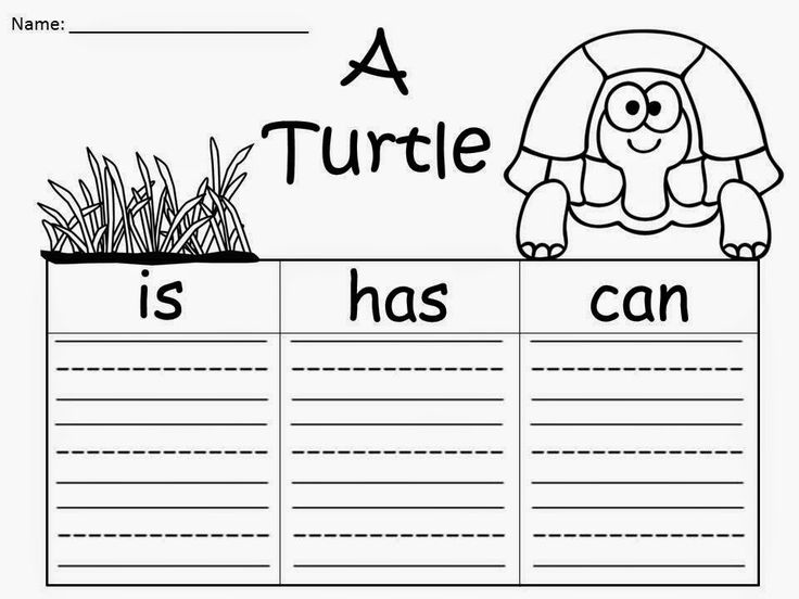 Free: Feeling a little shell shocked after a full year of teaching?  Ever feel like a turtle hiding in its shell the first few weeks after school's out? Here's to hoping everyone is having a Turtle-rific Summer!  Turtle Graphic Organizers.  Write 3 sentences about a turtle....A turtle is...A turtle has...A turtle can... A Freebie For A Teacher From A Teacher!  Regina Davis aka Queen Chaos at Fairy Tales And Fiction By 2.  Excuse me....my pajamas are calling my name!