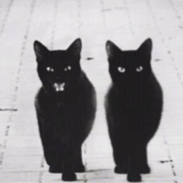 3612 Best Images About Black Cats Are Good Luck On