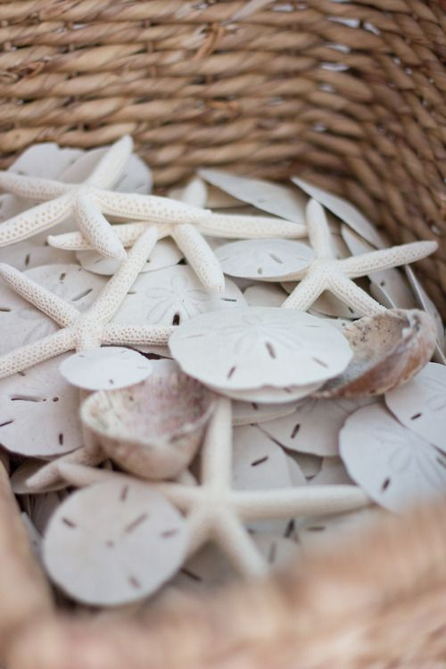 Basket full of sea shells