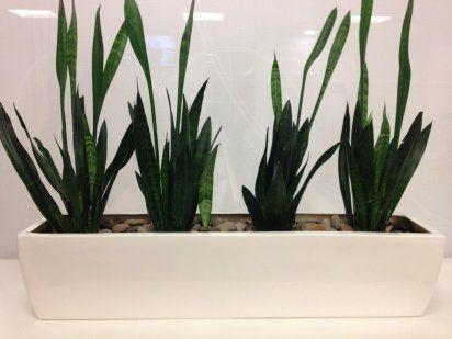 Cómo evitar el polvo en las plantas de interior