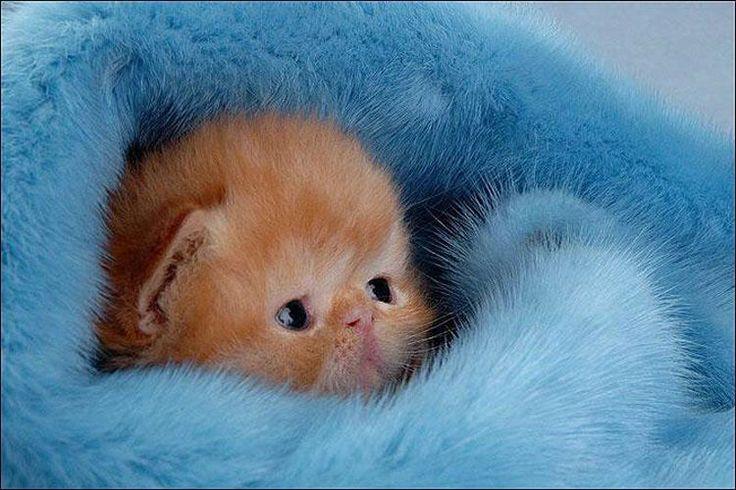 Awnn que gatito más bonito