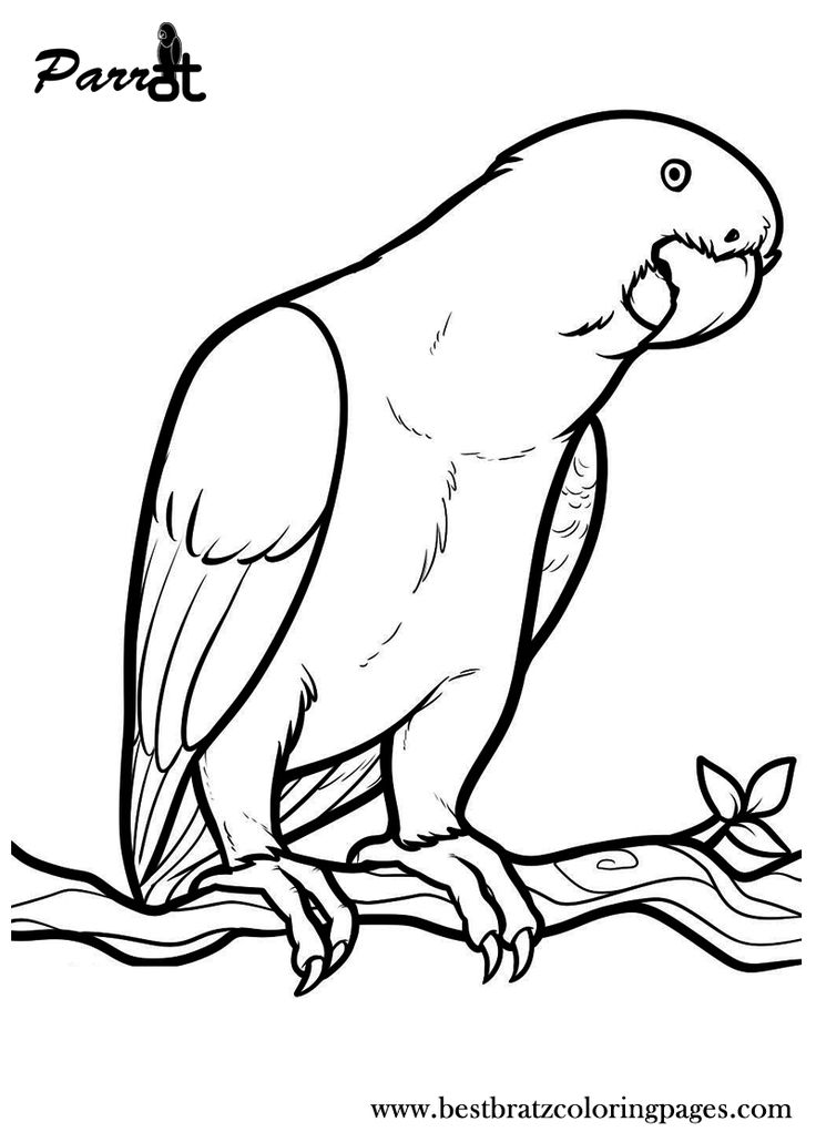 Free Printable Parrot Coloring Pages For Kids  Coloring Pages  Bird Coloring Pages, Bird