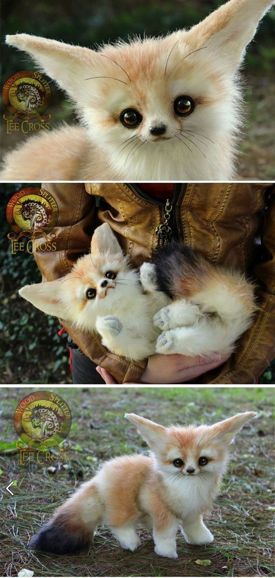 Quiero uno !!!!