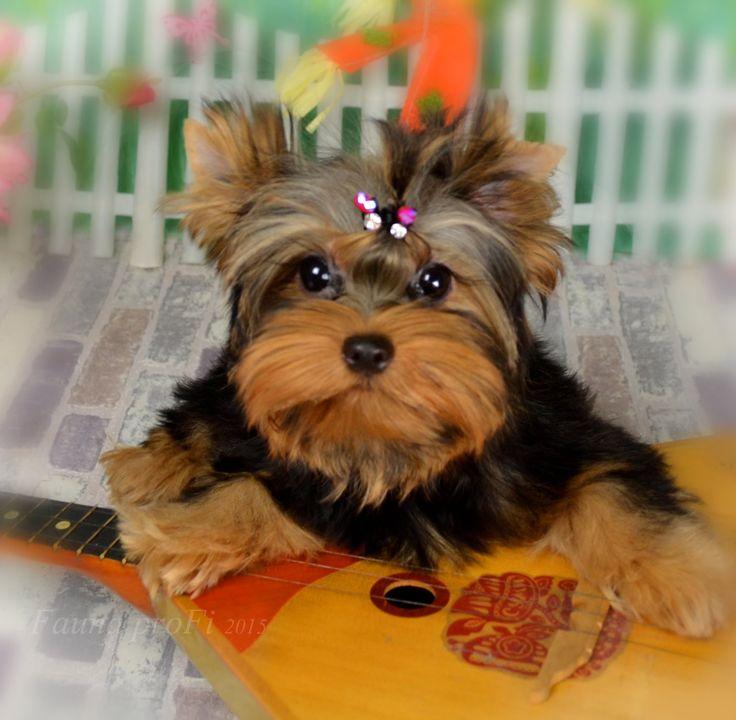 Дрессировка щенка. Команда  Место