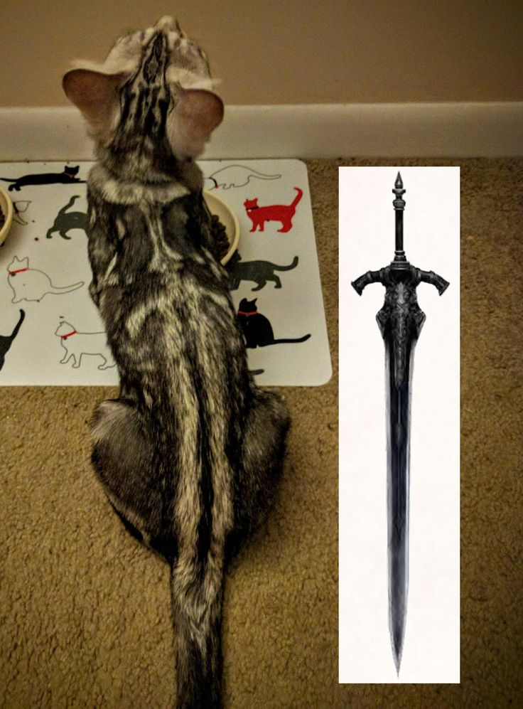 This cat's markings look like the Greatsword of Artorias ...