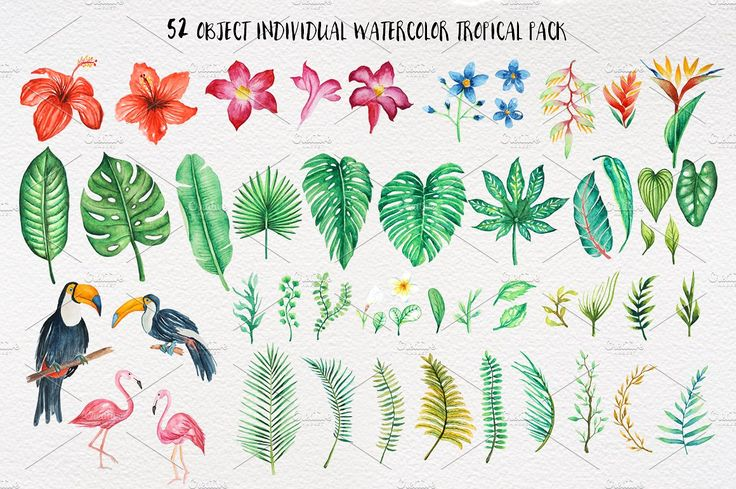 TROPICAL Watercolor clip art pack by andypray on @creativemarket