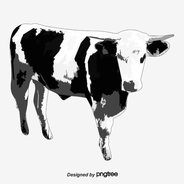 Cow Vector Animal Cartoon Png Transparent Clipart Image And Psd File For Free Download Cow Vector Cartoon Png Cartoon Cow