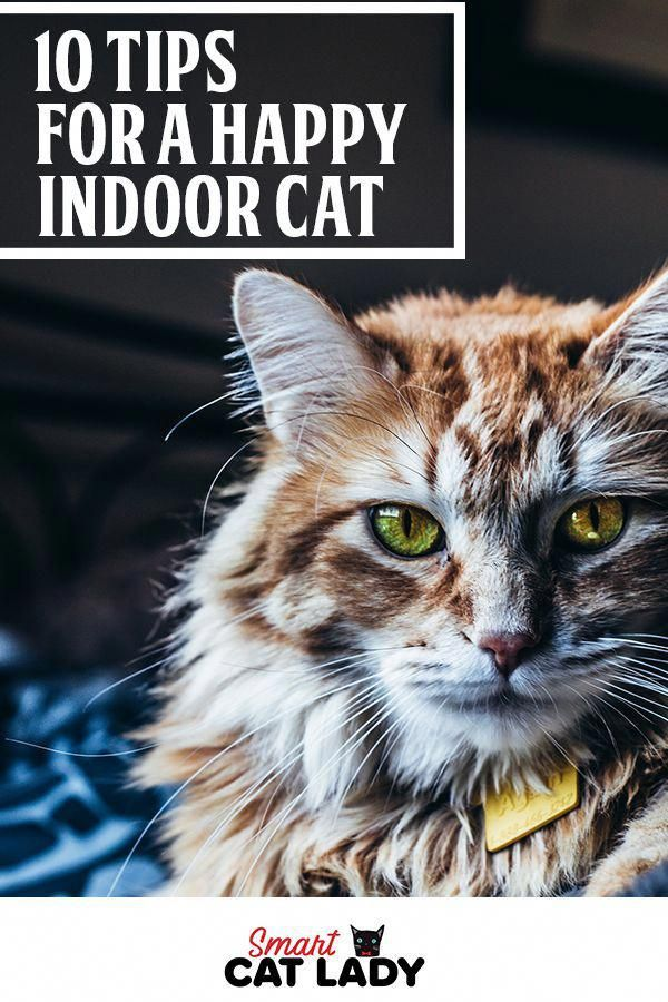 Want To Keep Your Indoor Cat Happy Check Out These 10 Fun Tips On How To Keep Your Cat Entertained And Happy Indoors Cats Indoor Cat Cat Care Cat Training