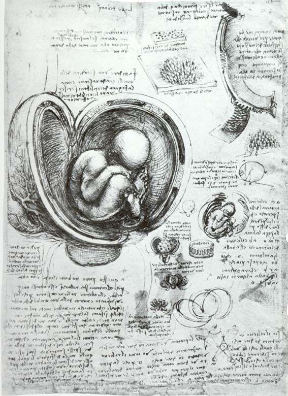 Leornardo Da Vinci Dibujos Inventos Estudios Anatomicos Y Ejercicios Artisticos Leonardo Da Vinci Dibujos Artistas