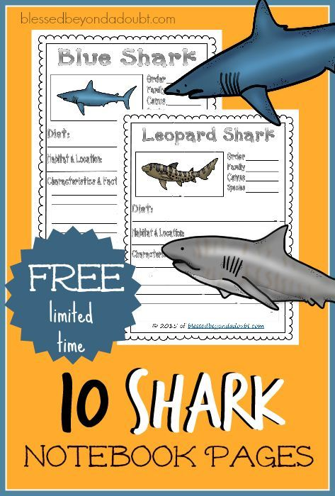 Learn about 10 different common sharks with these free shark notebook pages. Happy Shark Week!