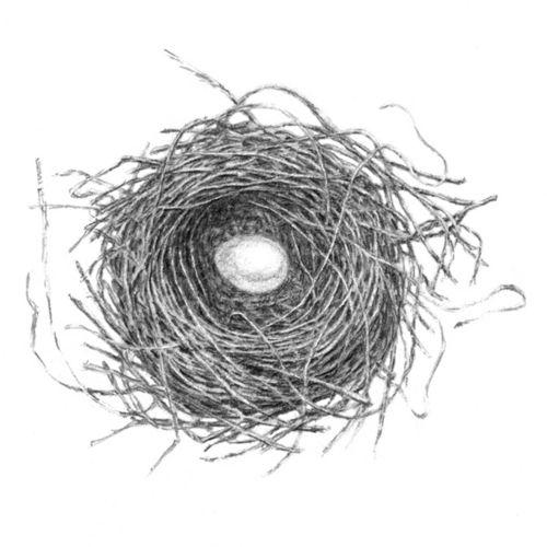 Bird Nest Bird Perched Side Nest Eggs Vintage Line Drawing