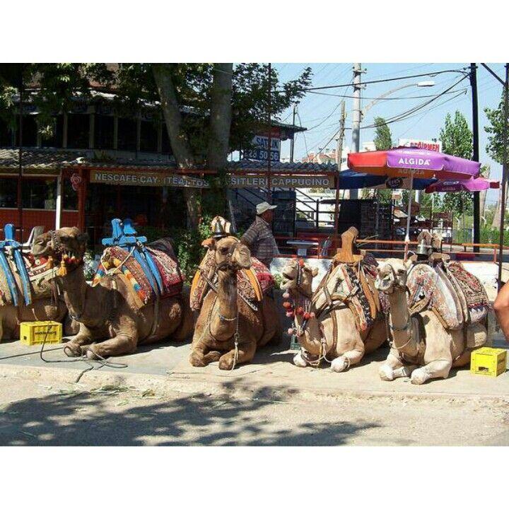 Camels!!! Antayla, Turkey 2006