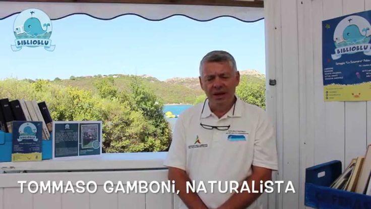 "BiblioBlu incontra Tommaso Gamboni - ""La Pinna Nobilis"""