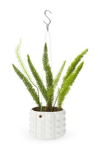 Aldus Hanging Potplant