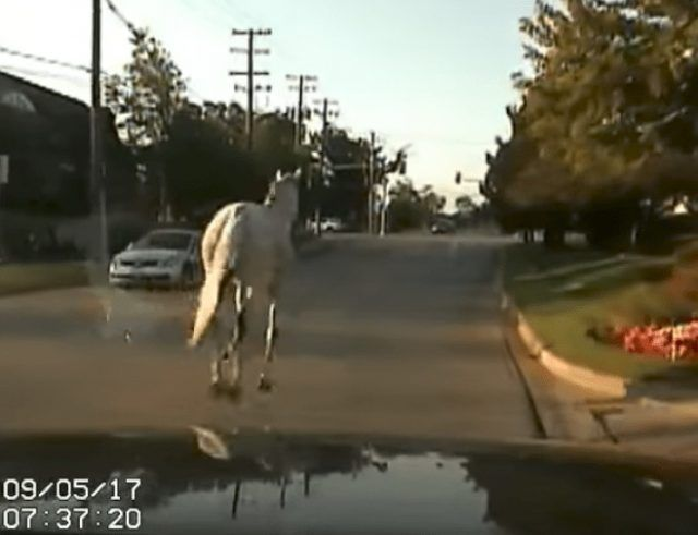 The most infamous pursuit in police history involved a white Bronco. Well police in Wauconda chased a white bronco of another kind. However, the only similarity with each chase were the slow speeds involved. https://www.lawenforcementtoday.com/police-chase-white-bronco-sound-familiar