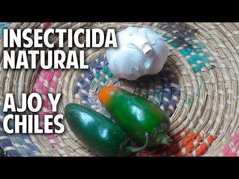 Remedio Casero muy eficaz para acabar con los Insectos de la Huerta - Organico, Facil y Economico - YouTube