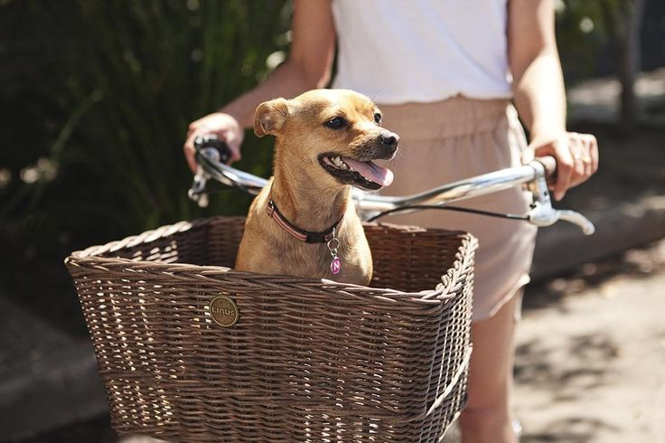There are so many possibilities for this extra large rattan basket, adding true utility to your bike. Fill it with groceries, a table lamp or even your little dog. This basket requires a front or rear