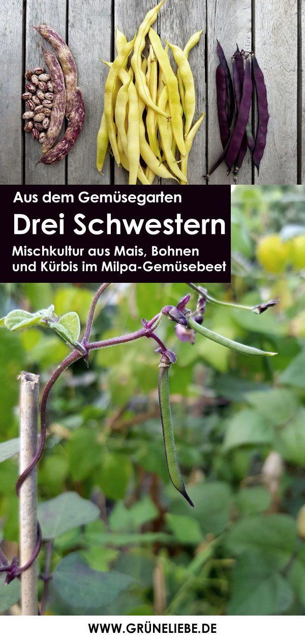 Pin Auf Garten Im Fruhjahr