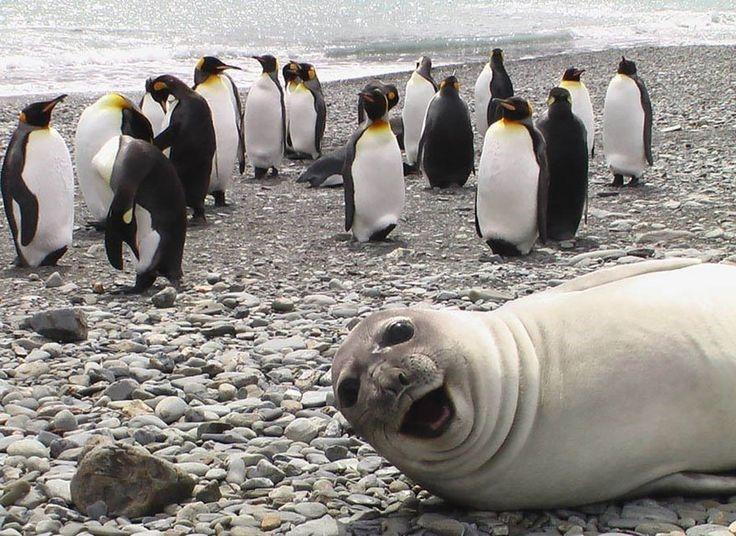 Foca em mim! 14 fotos em que os animais roubaram a cena - Mega Curioso