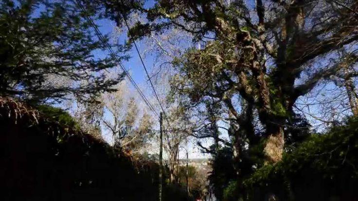 Pelos Caminhos de Eça, em Sintra