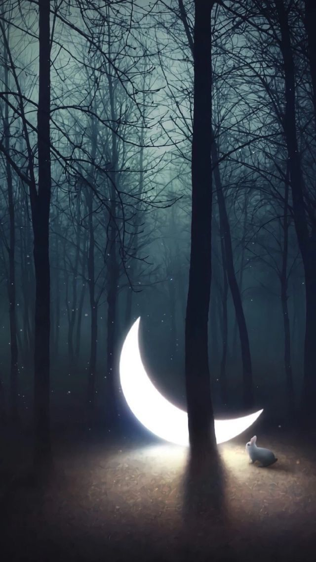 Moon In The Enchanted Forest
