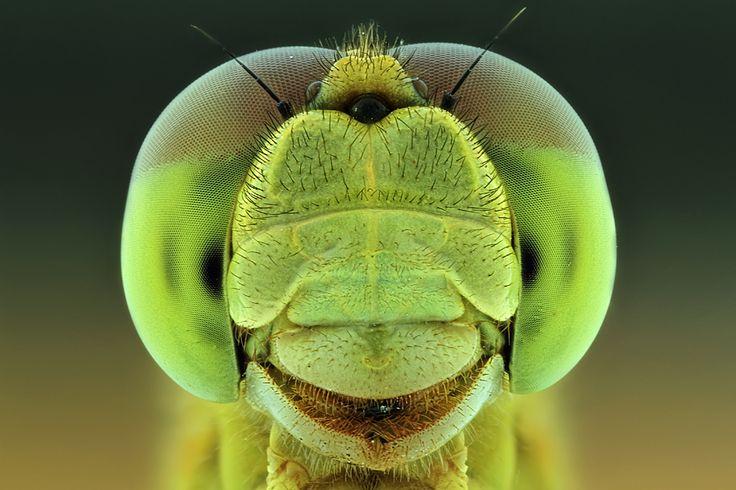 closeup macro photo of a dragonfly   Photographer: Shikhei Goh ~