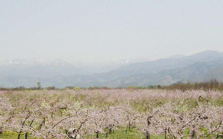 信州りんご発祥の里長野県赤沼で100年りんご作っています。おいしい蜜たっぷりのりんごを是非一度お試しください。シーズンにはりんご狩りも開催しています。
