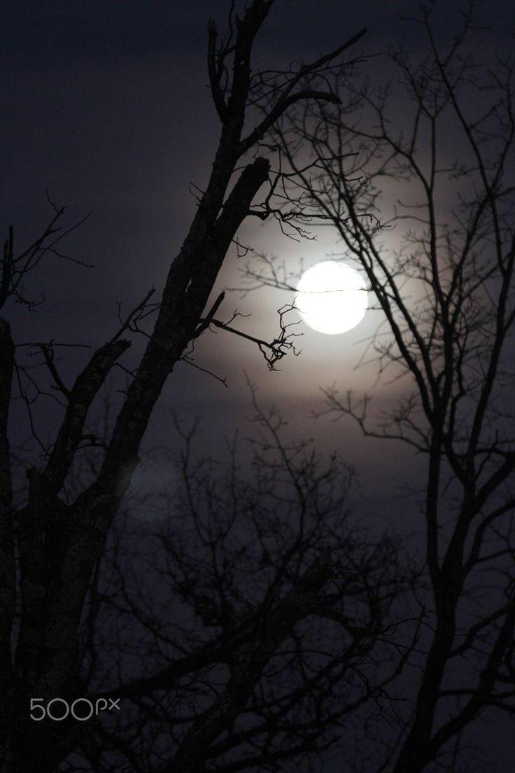 Pin by CynthiaAnna on Bella Luna ( Beautiful Moons) in
