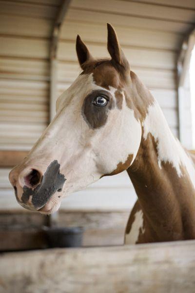 Horse Tumblr Horses Cavalli Animali E Cani
