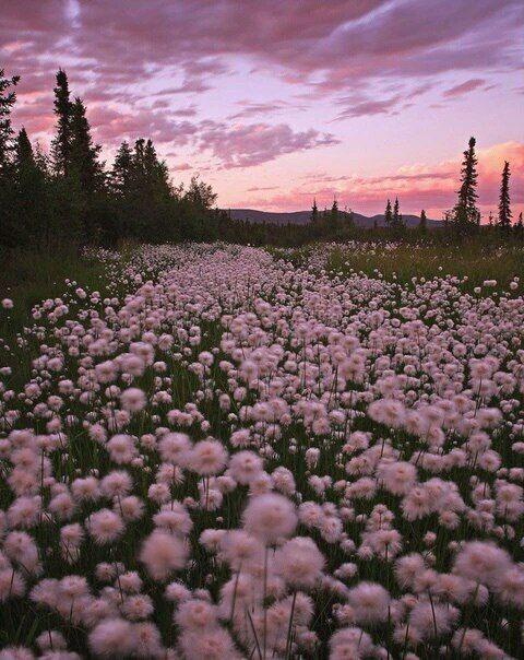 flowers, pink, and sky kép