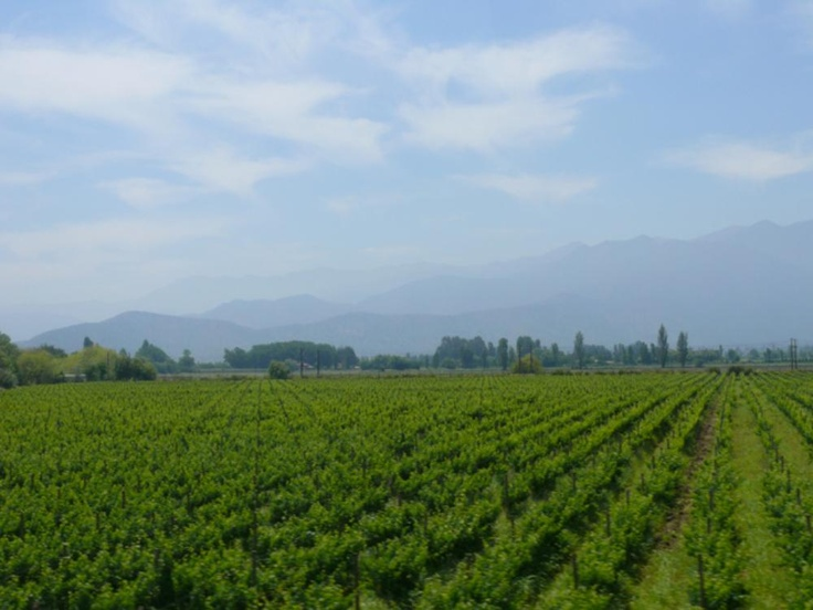 Curico, wine country, Chile