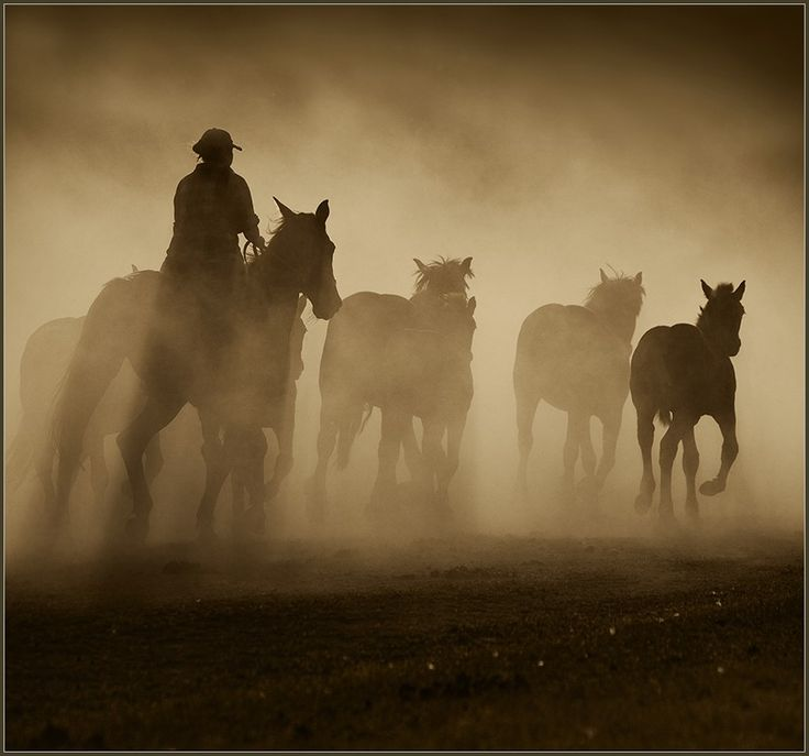wild horses cowboy