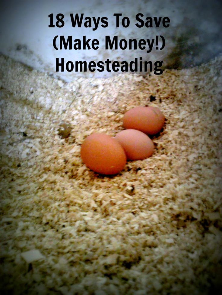 Living Life in Rural Iowa: 18 Ways To Save (And Make!) Money Homesteading