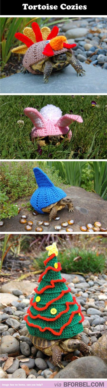 Because Tortoises Get Cold Too… I WILL GET THESE