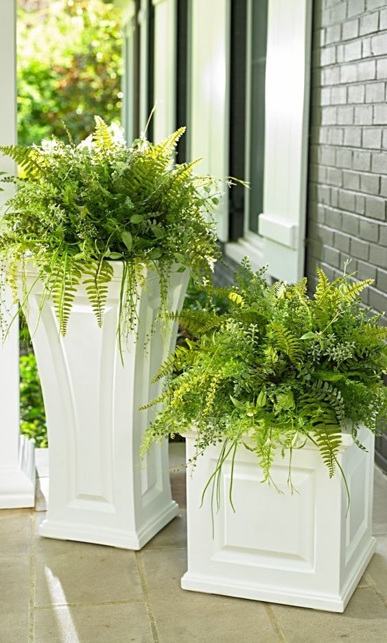 Loving the soft lush beauty of ferns in pots, indoors and outside.