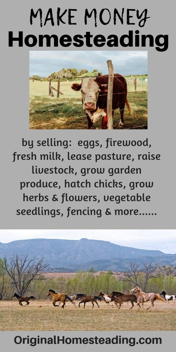 WAYS to MAKE MONEY HOMESTEADING – Original Homesteading | Create Your Style of Simple Living