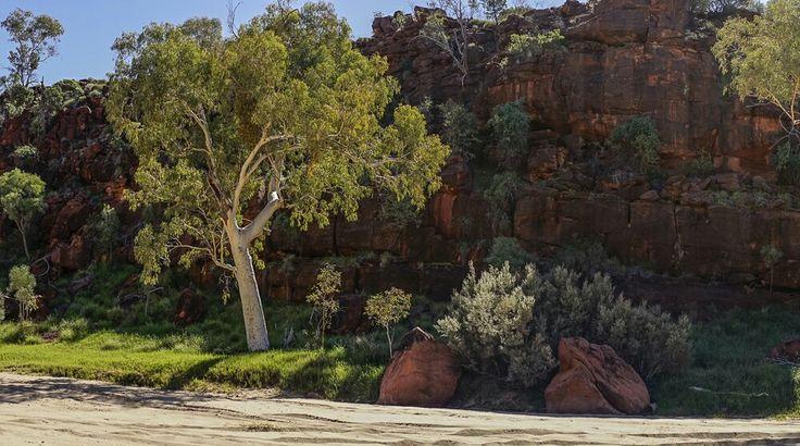 The Finke River. Near Hermansberg #australia  . #NT  #centralaustralia #centralia dry but 300 milion years old