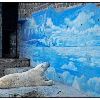 """Weit entfernt von allem, was diesen Eisbär glücklich machen würde. Für Tiere wie ihn, die in Zoos gefangen sind, erwarten die Zukunft nur Langeweile und Frustration. Lies den Bericht von Animal Equality über Zoos: www.spanishzoos.org. """"Repin"""" das Bild, um Leute dazu zu bewegen, zu Zoos NEIN zu sagen."""