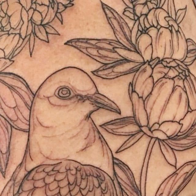 First stage - the outline. By Sophia Baughan. Emerald Dove, Peonies and Blackberries. Dec 2016.