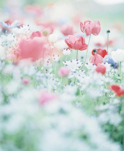floralls:  byune**